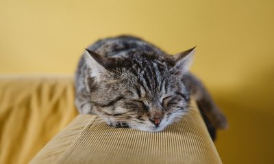 Comment les chats attrapent-ils le coronavirus? 3