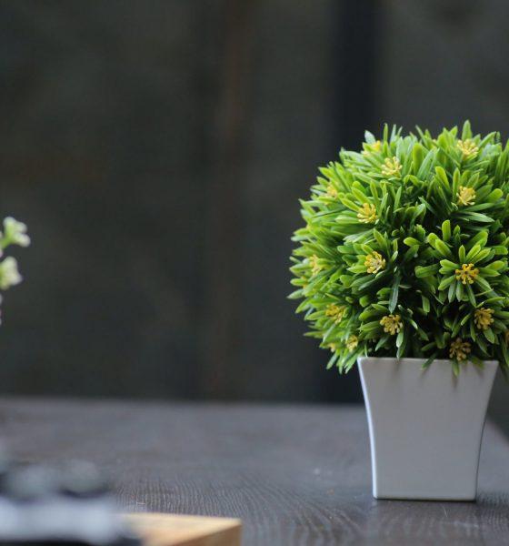 Pourquoi acheter un palmier artificiel ? 1
